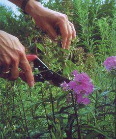 Off With Their Heads: Deadheading Perennials