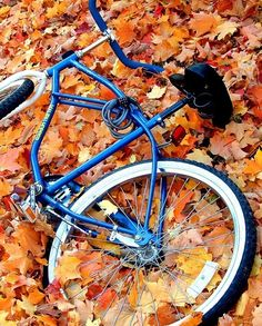 bicycle in the leaves