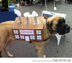 One of the Best Dog Halloween Costumes…