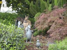 Could it be? Could it really be the Easter bunny? Photo from Bill and Reta of Clyde