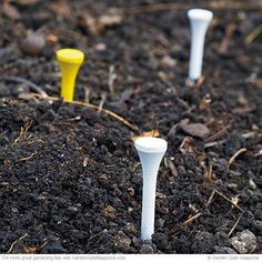 Easy Bulb Markers Have you ever planted bulbs in fall only to forget about them? Avoid slicing into the planting with a shovel in spring — mark where your bulbs are hiding with plastic golf tees. These bright reminders will stay put so you can prevent damage.