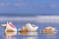 Seashells On The Shore