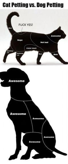 cats, cat pet, anim, dogs, stuff, funni, true, humor, dog pet
