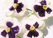 How to Preserve Flowers With Glycerine
