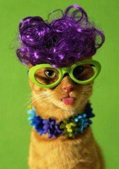 #petsinglasses #glasses #nerd