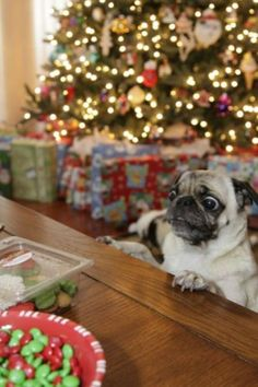 Merry Christmas from these adorable dogs   OMG too funny,