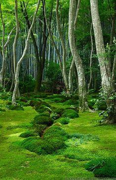 Moss garden, Giyo-ji temple. Kyoto, Japan. Photography by Damien Douxchamps
