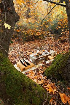 A lovely autumn picnic for two in the wood. #fall #autumn #picnic