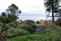 The Intercontinental Gardener: Dan Hinkley's garden at Windcliff