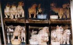 The suit says that Happiness is Pets is selling dogs from puppy mills. Ronald Berning - you are a pathetic excuse of a human being.