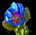 Stunning Botanical Images!