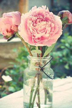 www.cathys-curios.co.uk repinned & tweeted this - Peony