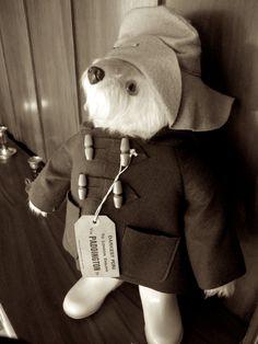 paddington bear baby rooms - Google Search
