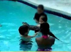 Alligator Pool Parties On The Rise ... #pets #animals ... PetsLady.com