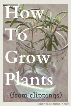 How to Grow Plants from Clippings
