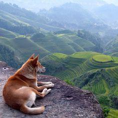 Longsheng Rice Terraces / China