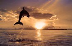 Dolphin photo by Vitaly Sokol