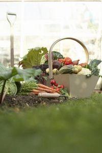 Vegetable Gardening Tips: Soil and Fertilizer