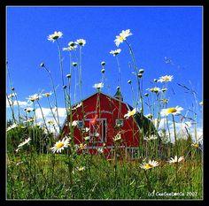 Look at barns