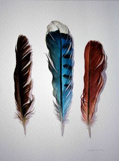 Watercolor of feathers