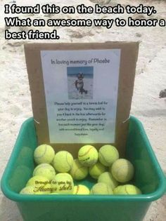 In loving memory of Phoebe - a cool way to honor a beloved pet.