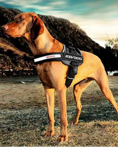 Designed for use on the street or on a trail, the EzyDog Convert Harness boasts a simple, utilitarian design that combines comfort with style.