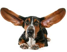 Homemade ear cleaner for dogs - equal parts apple cider vinegar, purified water,hydrogen peroxide