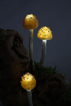 luminous mushrooms
