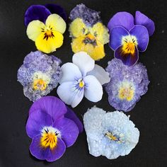 CRYSTALLIZED VIOLETS - make your own dainty and edible cake decorations by crystallizing violets  #edibledecoration