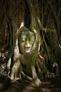 Buddha Head at Wat Mahathat, Ayutthaya, Thailand Loved and Pinned by www.downdogboutique.com to our Yoga community boards