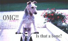 #funny #dog #bone #caption #pet !