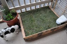 D.I.Y- Patio gog litter box with real grass!!: http://www.kymanddustinadventures.com/2010/11/d.html   To cover 1 of our 3 daily walks.
