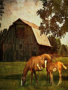 Barn And Horses Painting