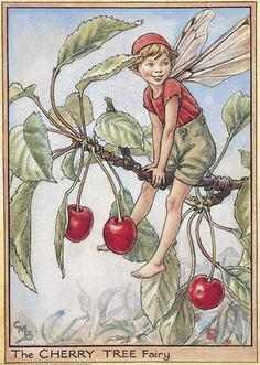 cice mari, mari barker, art, cherri tree, flowers, cherries, flower fairies, cicely mary barker, tree fairi