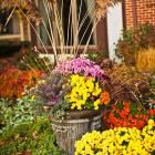 Fall fireworks: Plants that light up your landscape | Midwest Living