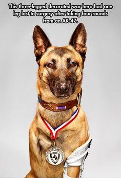 War Hero Dog