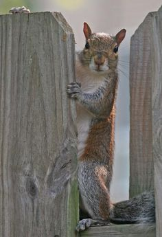 Our undercover agents are some of the sneakiest ones around. squirrel group, anim, squirrels, chipmunk, nut, squirrel 49