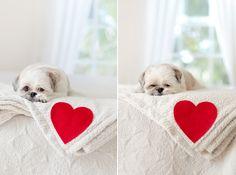 Love Heart Dog Blanket DIY