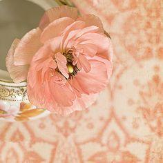 old rose poppy