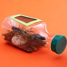 Kids can create their own bug habitat by putting sticks, grass, and rocks inside of an empty juice bottle.