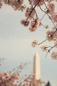 Spring in DC I Photographic Print Pink Cherry by artbycmcdonald