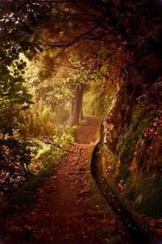 walking path in the woods..