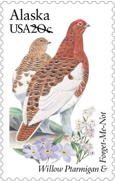 Willow Ptarmigan and Forget-Me-Not