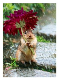 Cute Little Chipmunk's Flower Umbrella #wedding