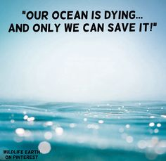 """""""What can YOU do to make me change these words into something GOOD?! Save our oceans and save our world... before it's too late!"""" - Daniel Powers, Wildlife Earth."""
