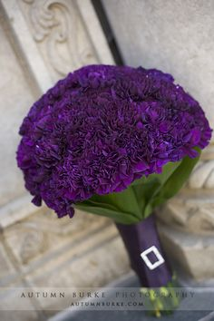 purple carnations, good accent in bouquet or centrepieces