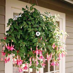 Great hanging baskets