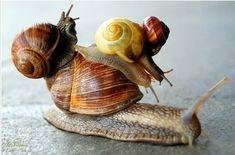 Snail on snail