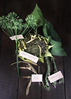 DIY Guide to Saving Herb Seeds!