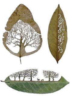 Amazing leaf cut-outs by Spanish artist Lorenzo Duran.  He uses leaves as the canvas for his cutaway art.  After washing and drying the leaf, he carefully cuts away segments to create beautifully detailed art.